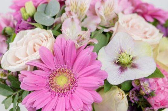 piirangud- Kolm Lille lillepood