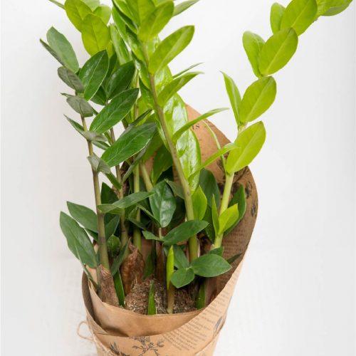 Sulgvõhk - Kolm lille lillepood